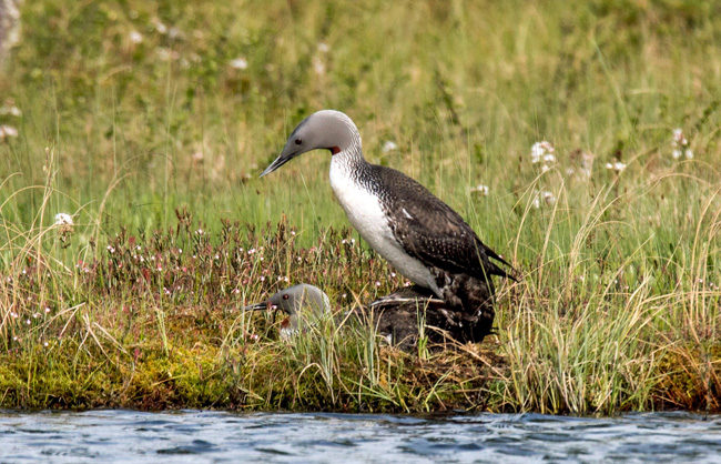 12 IMG_3731_650px-4