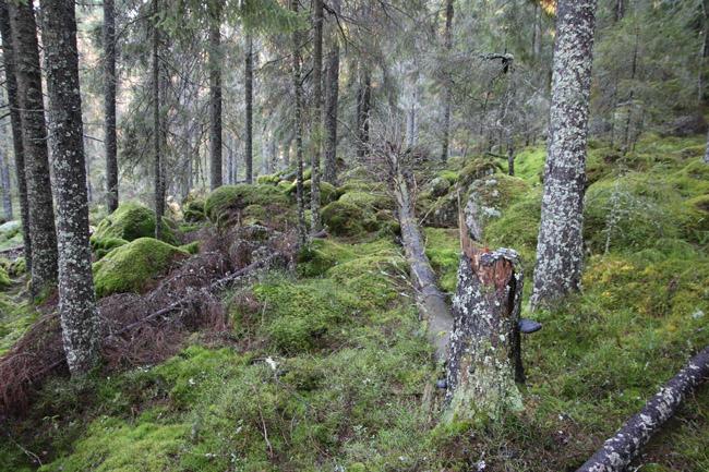 Bild 10 skog
