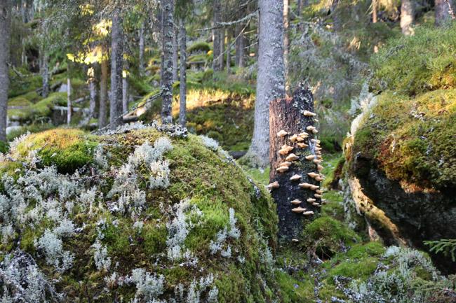 Bild 11. Skog