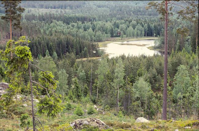 Bild 2 Grästjärn  år 1996