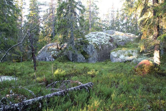 Bild 6. Skog