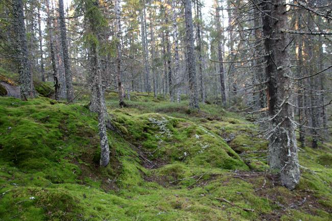 Bild 7. Skog