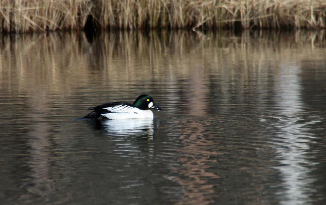 IMG_0295_650px-2