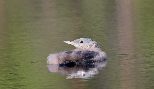 18 IMG_7226_650px-1